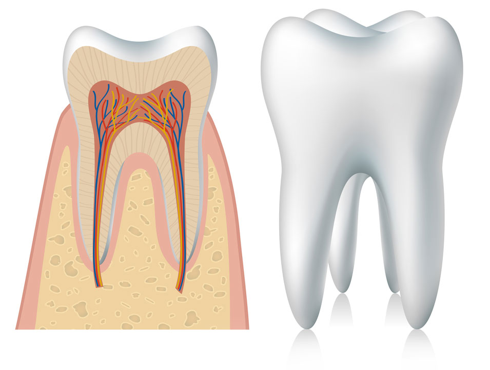 Endodoncia Clínica Dental Calas Cádiz